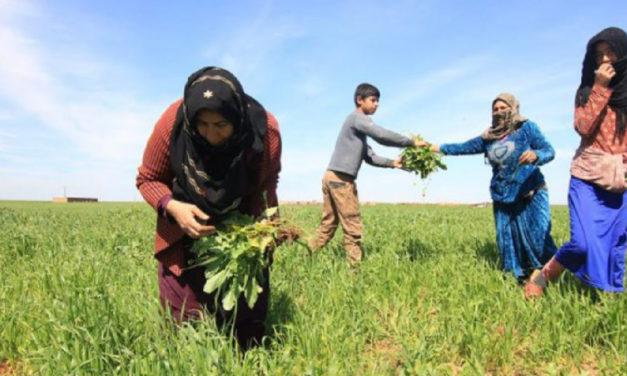 Rojava: Μια κοινωνία που δεν είναι ικανή να υπερασπίζεται και να φροντίζει για την υγεία της δεν μπορεί ποτέ να είναι ελεύθερη