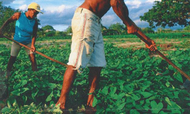 Βραζιλία: Αγροοικολογία και οργανωμένος αναρχισμός: