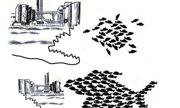 Συνέλευση κατά της Καύσης Σκουπιδιών | Για την αδειοδότηση της Μονάδας SRF στο Δήμο Βόλου