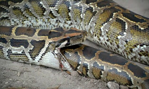 Λιβύη ή το φίδι που δαγκώνει την ουρά του
